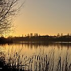 Late afternoon at Harrold Country Park by rexhank