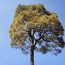 Nature's Beauty by Manish Yadav