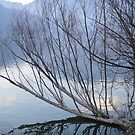 Drowned Tree In Lake by Manish Yadav