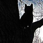 Stalker Kitty by nikspix