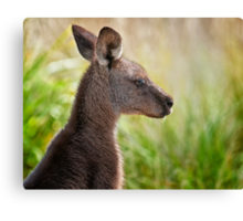 Skippy, skippy.... Canvas Print