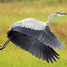Heron Flight by Debbie  Roberts