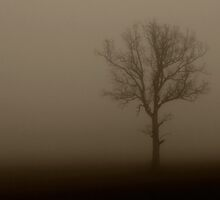 Lonely tree in fog by Ulf Bjolin