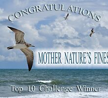 Top 10 Challenge Winner Banner by Kathy Baccari