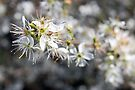 Spring Bokeh by Astrid Ewing Photography