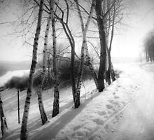 winter wonderland by Dorit Fuhg