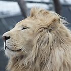 White Lion by afincher