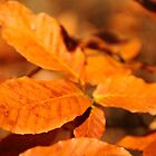 Fall leaves by jckiss