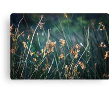 In some small places I let my light shine Canvas Print