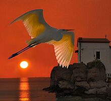 Great Egret sunset in Skala by Eric Kempson