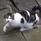 Nextdoor neighbour cats/(1 of 2) -(240212)- digital photo by paulramnora