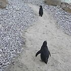 London Zoo/Penguin/(1 of 2) -(190212)- digital photo by paulramnora