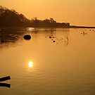 Morning Glow on the Estuary  by Martina Fagan