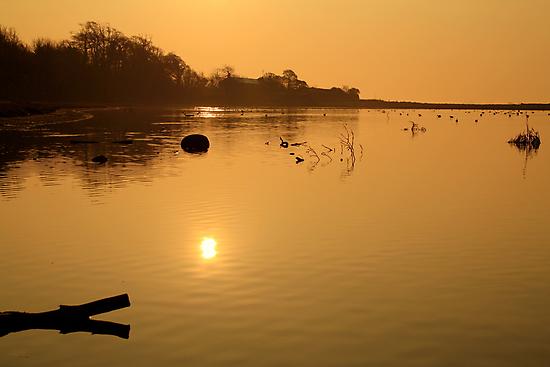 Morning Glow on the Estuary  by Martina Fagan