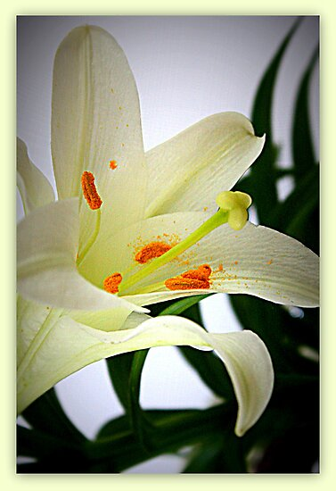 Easter Lily in Frame by AuntDot
