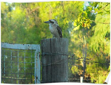 Bluff's  Best Kookaburra Sanctuary    by 4spotmore