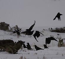 Chasing Ravens #1 by Ken McElroy