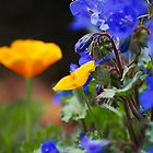 Poppies and Bluebells  by Saija  Lehtonen