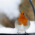 I didn&#x27;t see that in the forecast! Robin in a snowstorm, County Kilkenny, Ireland by Andrew Jones