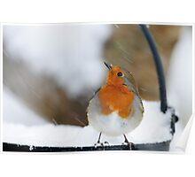 I didn't see that in the forecast! Robin in a snowstorm, County Kilkenny, Ireland Poster
