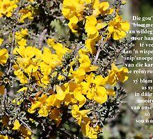 Blommedos van granaatbos by Rina Greeff