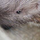 Closeup of Porcupine by karina5