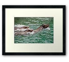 Harbor seals Framed Print