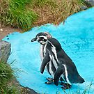 Magellanic Penguins by Vac1