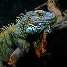 Sleepy Dinosaur by Jason Dymock Photography