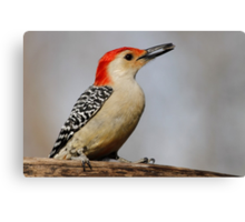 Happy Red Belly Canvas Print