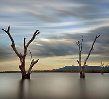 Three Dead Trees - Lake Fyans The Grampians by Graeme Buckland