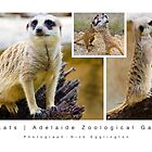 Meerkats : Adelaide Zoological Gardens by Nick Egglington