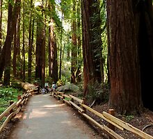 Muir Woods National Monument by Ross Campbell