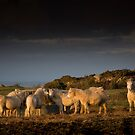 Eat hay while the sun shines  by Raymond Kerr