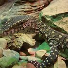 Lace Monitor by Melissa Gray