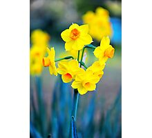 Jonquil Photographic Print