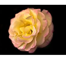 Full Bloom Beauty  Photographic Print