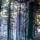 The Magic of the Forest by missmoneypenny