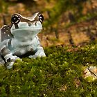 Milk frog on moss by Angi Wallace
