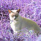 Pussy Cat in Purple by missmoneypenny