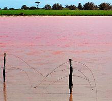 The Pink Lake # 2 by Eve Parry