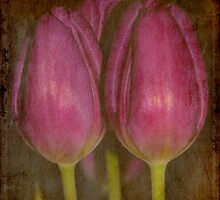 Three Beauties by Ulla Vaereth