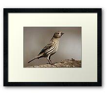Female House Finch Framed Print