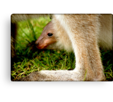 JOEY in mummy KANGAROOS pouch (wee skippy) Canvas Print