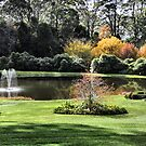 Bisley Gardens - Mt Wilson NSW Australia by Bev Woodman