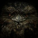 Frogmouth by Aaron .