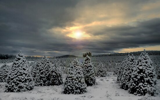Fir Trees and Snow by Charles &amp; Patricia   Harkins ~ Picture Oregon