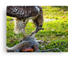 A hawk and it's meal Canvas Print