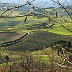 Toscana countryside by gluca