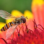 Mmm Nectar by ColinKemp